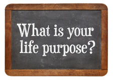 what is life purpose