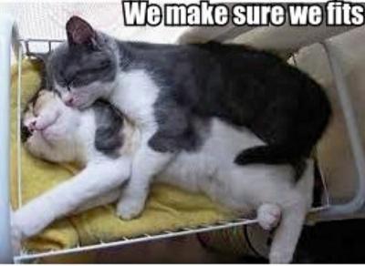 kitties sleeping together