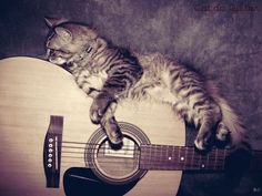 b3c2b9936a4bf64dee8810ee7f814075--cats-musical-guitars